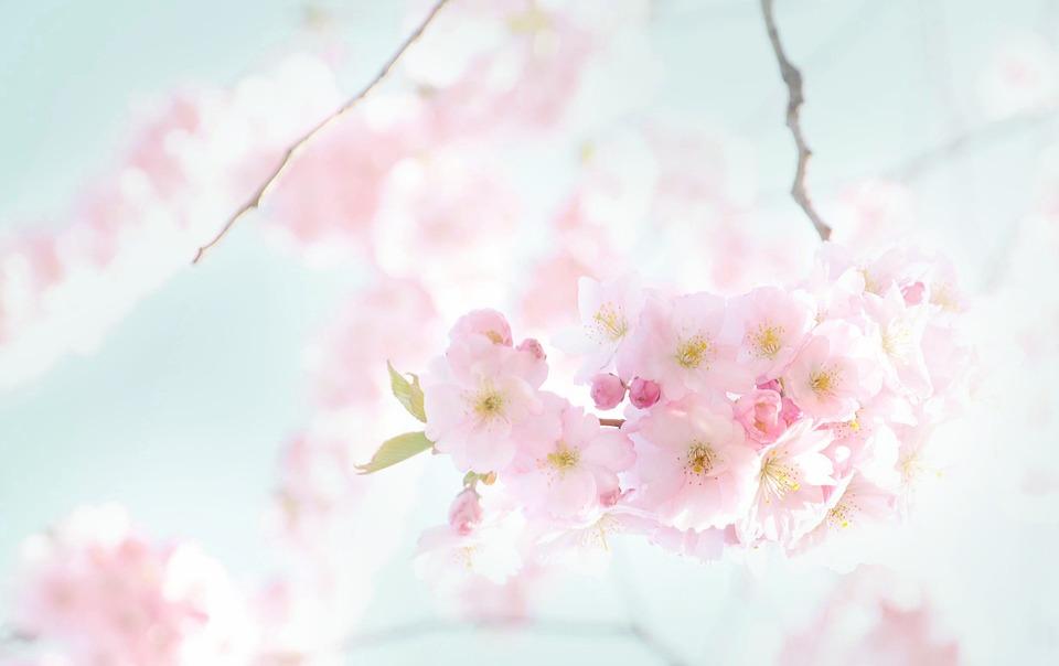 flowers-290855_960_720[1]