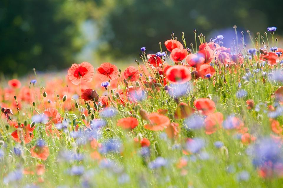 flowers-364162_960_720[1]