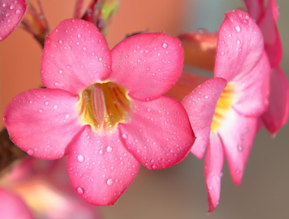 flower-861124_960_720[1]
