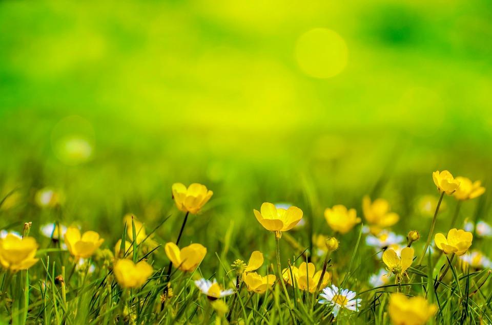 spring-316535_960_720[1]