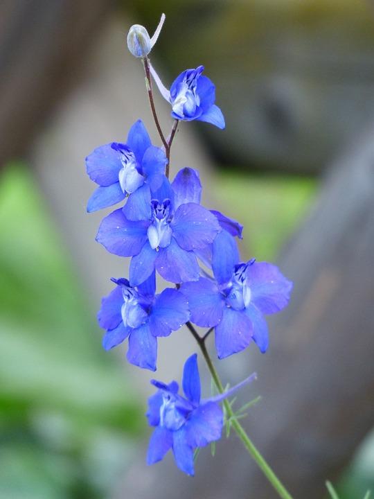 flower-167347_960_720[1]