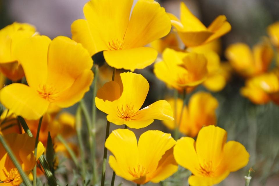 flower-852184_960_720[1]
