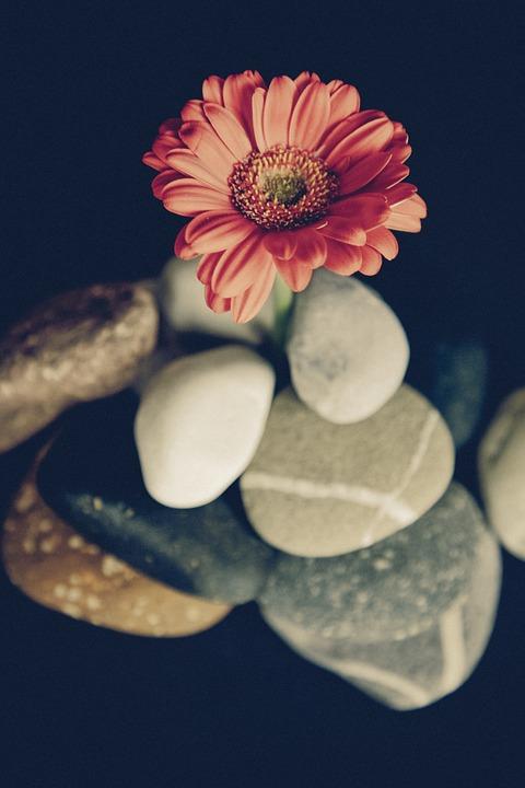 flower-942376_960_720[1]