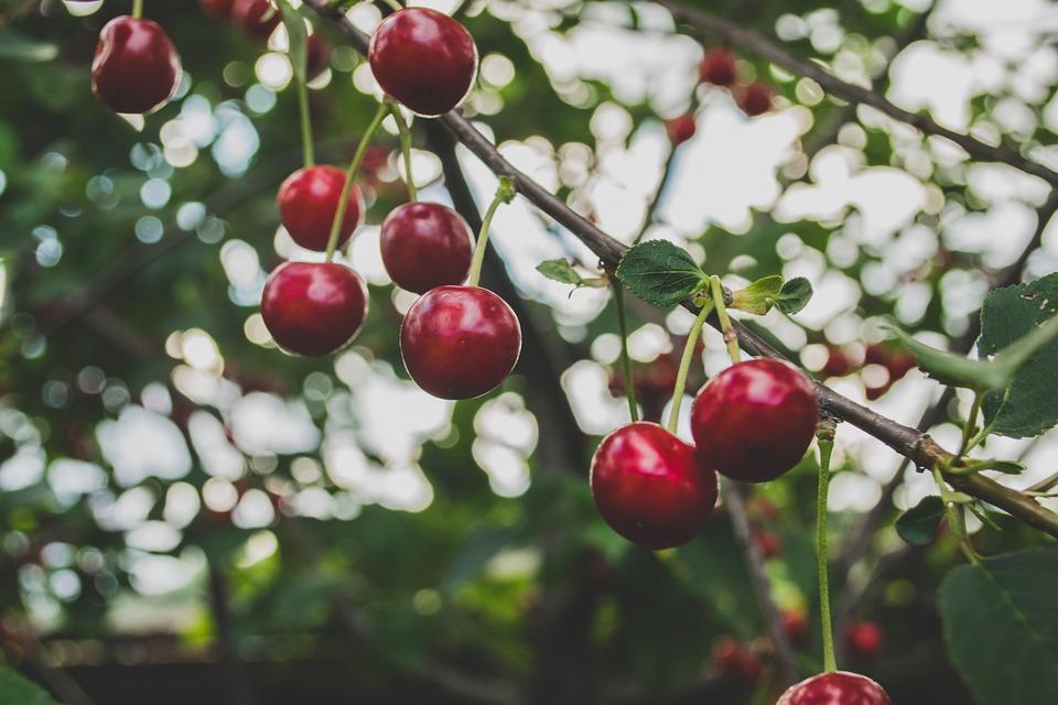 cherries-839864_960_720