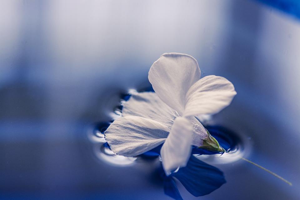 flowers-1167669_960_720